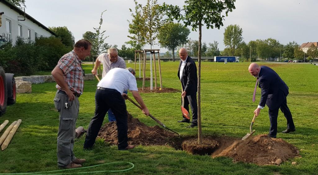 tree planting teamwork
